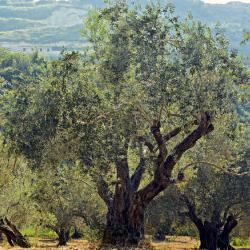 agricultura-guia-invertir-espana